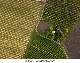 planted agricultural fields with a road and a house, top ...