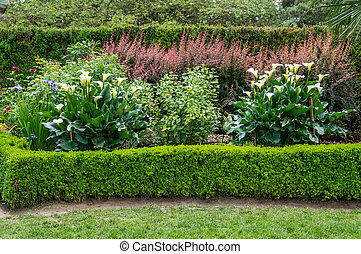 Planted garden with blooming Calla Lily - A planted garden...