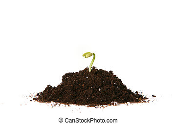 Planted Seed Sprouting - New Seed Growing in the Dirt