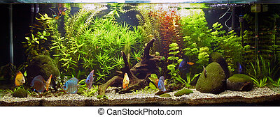 Planted Tropical Aquarium and Fish