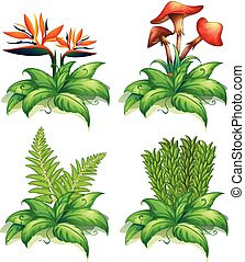 planten, anders, vier, achtergrond, witte , types