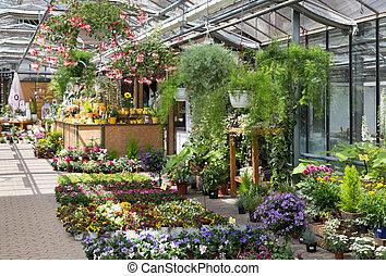 planten, centrum, het verkopen, tuin, broeikas