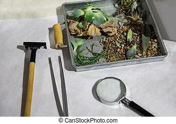planten, in, de doos, met, tools.