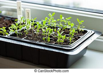 planten, kiemplant, plastic, groeiende, germination, blad