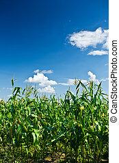 planten, koren