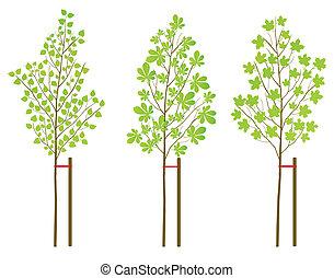 planten, set, boompje, vector, achtergrond, berk, kastanje,...