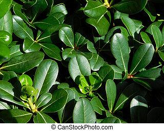 planten, textuur