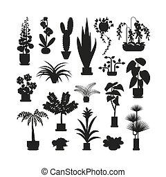planten, thuis, silhouette