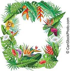 planten, tropische , frame, bloemen