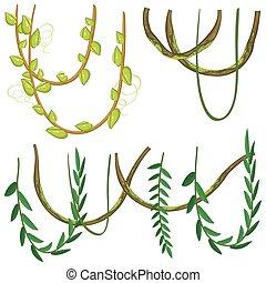 planten, types, anders, witte achtergrond
