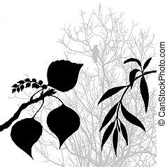 planten, vector, silhouette, illustratie, achtergrond, witte