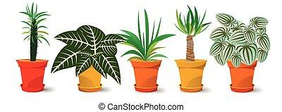 planten, vijf, potten