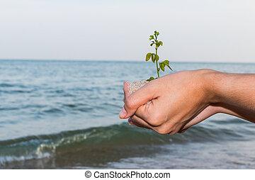 plantende boom, hand houdend, nieuw, meisje