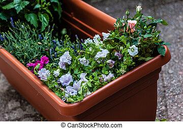Planter - a big plastic planter full of little flower