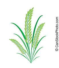 planter, baggrund, grønne, kornsort, hvid ris, eller