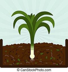 planter,  compost, poireau