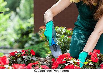 planter, femme, fleurs