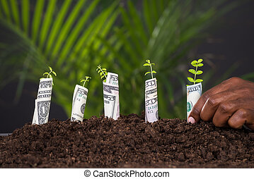 planter, gros plan, sapling, personne, main