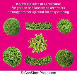 planter, ind, top udsigt, by, let, avisudklippet