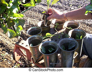 planter plants hand