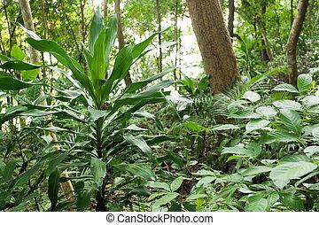 planter, rainforest
