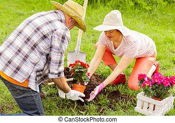 planter, retiré, maison, sommet, petite maison, fleurs, couple, vue