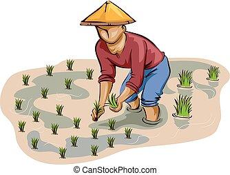 planter riz, homme, paysan