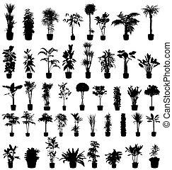 planter, silhuetter, samling