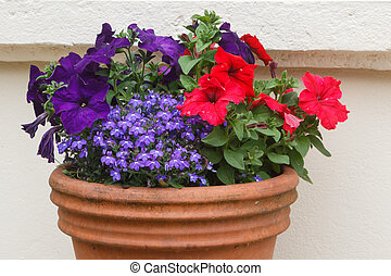 Planter with petunia flowers in a garden