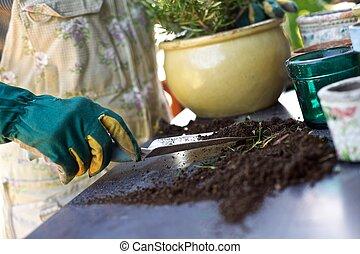 planterar, färsk, kvinnlig, trädgårdsmästare, potting