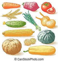planterar, grönsaken, vektor, frukter