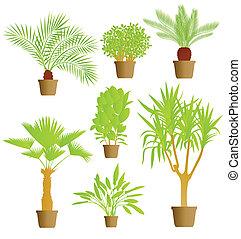 planterar, hus, vektor, bakgrund