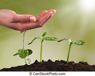 planterar, kvinna, vattning, ung, hand