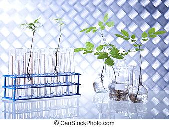 planterar, och, laboratorium