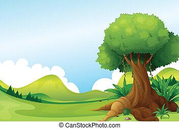 planterar, stor, vin, kullar, träd