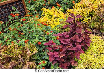 Planterar, Trädgård, färgrik, ombyte