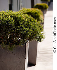 Planters on sidewalk in the city.
