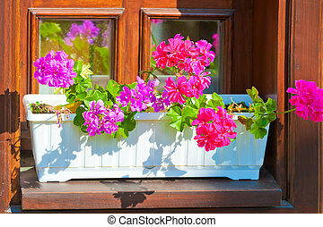 planters with pink flowers on the windowsill