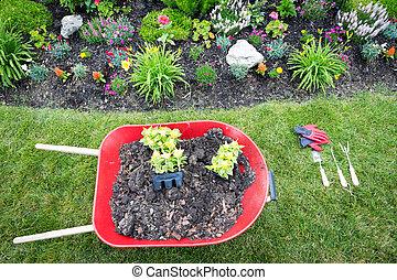 Planting a celosia flower garden in spring