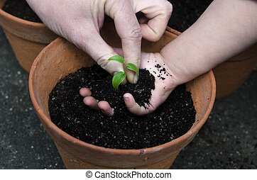 Planting a plant