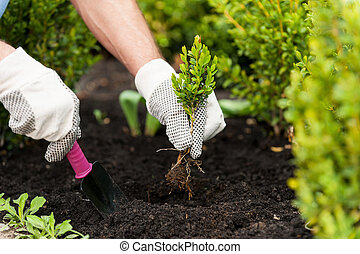 Planting a seedling. Close-up image of male hands in glovers holding green plant