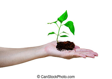 planting a tree ,a palm holding a green tree with soil