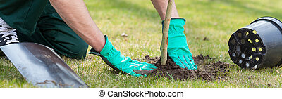 Planting a tree - Young man kneeling during planting a tree
