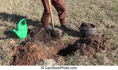 planting apple tree in spring