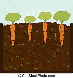 Planting carrots and compost - Planting carrots. Composting...