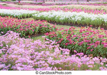 Planting flowers in garden.