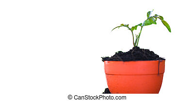 Planting flowers in pot with soil on white background / works of gardening tools small plant concept