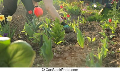 Planting flowers in the garden