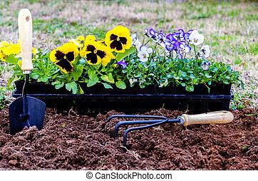 Planting Flowers - Planting flowers. Daisies and violas in ...