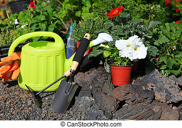 planting flowers with garden tools ,various flowers and herbs in flower pots.